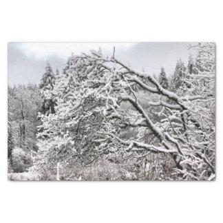 Snowy BranchesTissue Paper