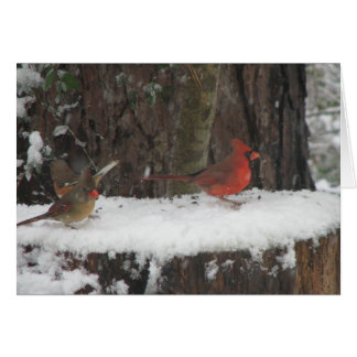 Snowy Cardinals and Towhee Greeting Card