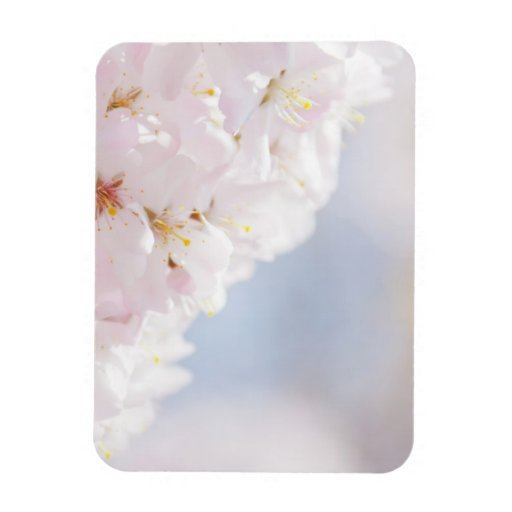 Snowy Cherry Blossoms Magnet