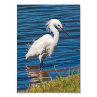 Snowy Egret at the Pond Photo Print