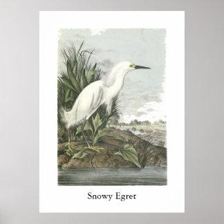 Snowy Egret, John Audubon Poster