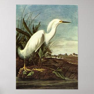 Snowy Egret, John James Audubon Poster