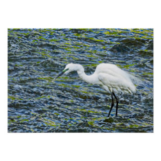 Snowy Egret with Blue & Green Lake Fractal Art Poster