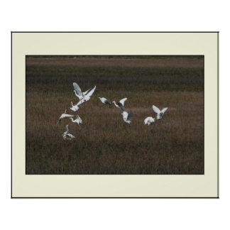 Snowy Egrets in Formation Print