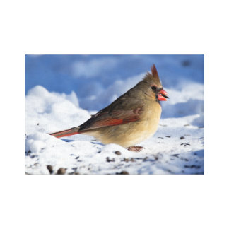 Snowy Female Cardinal Canvas Print