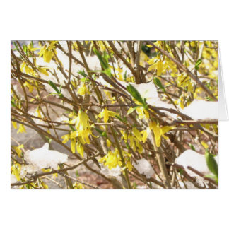 Snowy Forsythia Card