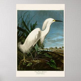 Snowy Heron White Egret Audubon Birds of America Poster