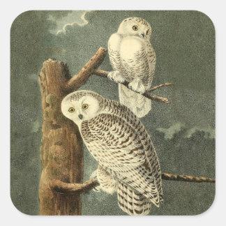 Snowy Owl Audubon Bird Art Illustration Artwork Square Sticker
