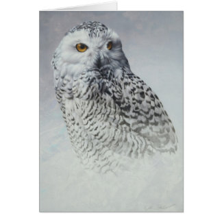 Snowy Owl Blank Card by Andrew Denman
