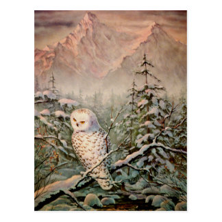 SNOWY OWL by SHARON SHARPE Postcard