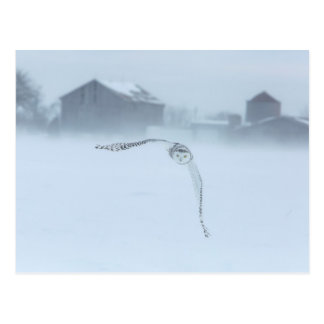 Snowy Owl In Flight In Winter Postcard
