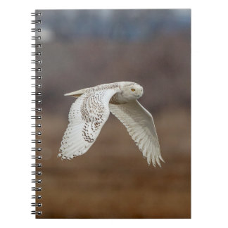 Snowy owl in flight notebook