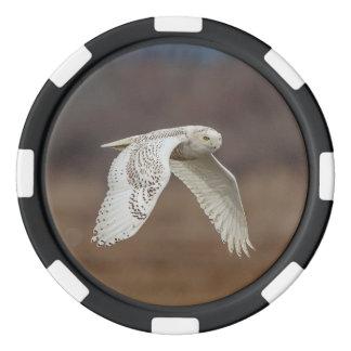 Snowy owl in flight poker chips