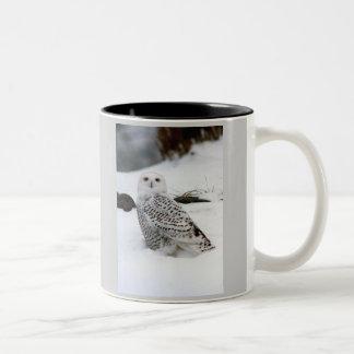 Snowy Owl in The Evening Shadows Two-Tone Coffee Mug