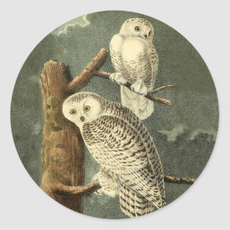 Snowy Owl John James Audubon Vintage Illustration Classic Round Sticker