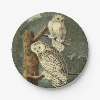 Snowy Owl John James Audubon Vintage Illustration Paper Plate