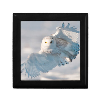 Snowy Owl landing on snow Gift Box