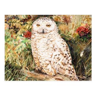 Snowy Owl perched on a log Postcard