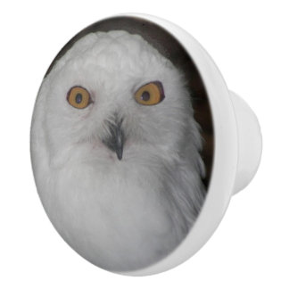 Snowy Owl Photo Ceramic Knob