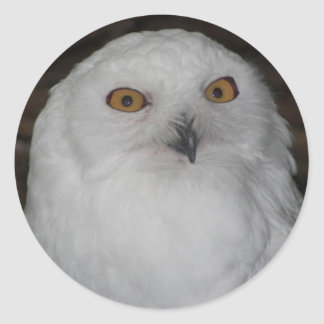 Snowy Owl Photo Classic Round Sticker