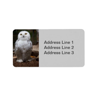 Snowy Owl  Photo Label Address Label