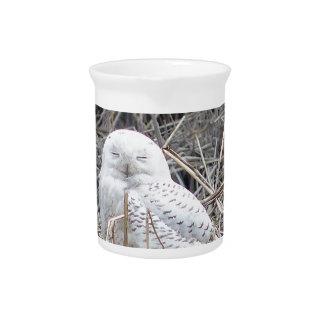 snowy owl pitcher