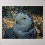 Snowy Owl Print