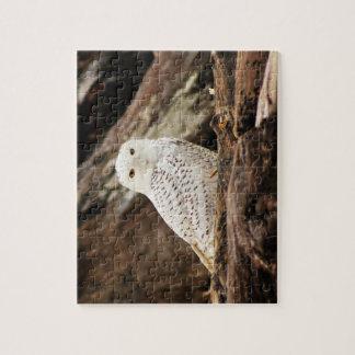 Snowy Owl Puzzle