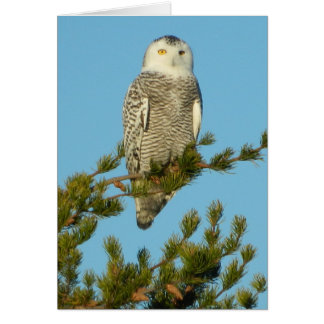 Snowy Owl Real Hoot Keeping in touch Artic Bird Card