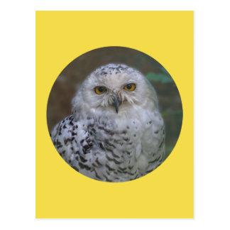 Snowy Owl, Schnee-Eule 02_rd Postcard