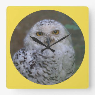 Snowy Owl, Schnee-Eule 02_rd Square Wall Clock