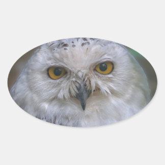 Snowy Owl, Schnee-Eule Oval Sticker