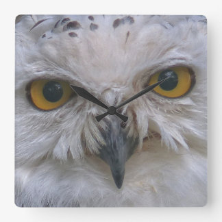 Snowy Owl, Schnee-Eule Square Wall Clock
