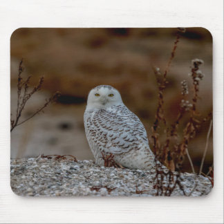 Snowy owl sitting on a rock mouse pad