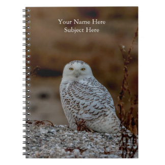 Snowy owl sitting on a rock notebook