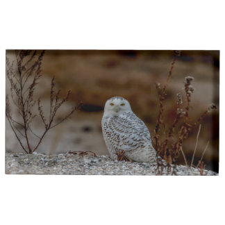 Snowy owl sitting on a rock place card holder