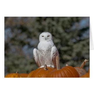 Snowy Owl Sitting on Pumpkins Greeting Card
