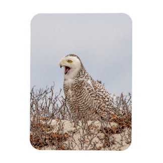 Snowy owl sitting on the beach magnet
