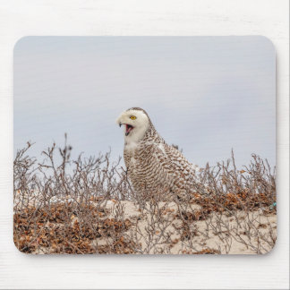 Snowy owl sitting on the beach mouse pad