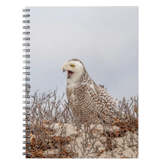 Snowy owl sitting on the beach notebook
