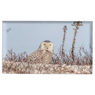 Snowy owl sitting on the beach place card holder