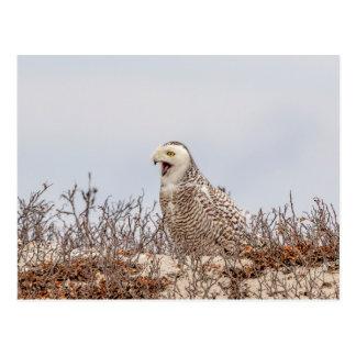 Snowy owl sitting on the beach postcard