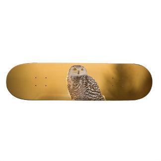 Snowy Owl Skate Deck
