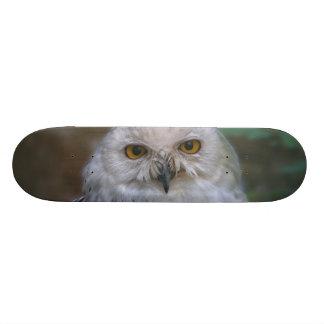 Snowy Owl, snow owl