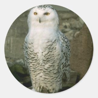 Snowy Owl stickers