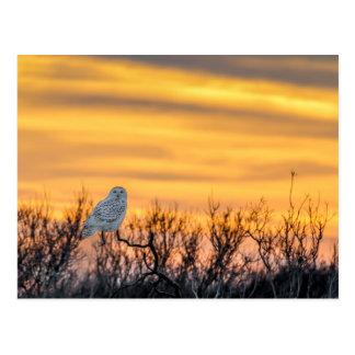 Snowy Owl Sunset Postcard