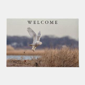 Snowy owl taking off doormat