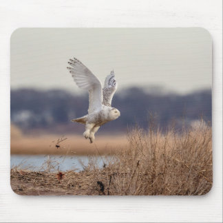 Snowy owl taking off mouse pad