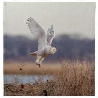 Snowy owl taking off napkin