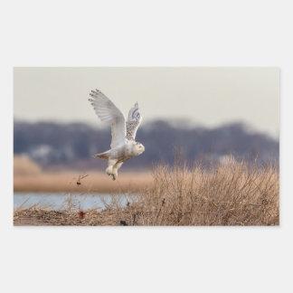 Snowy owl taking off rectangular sticker